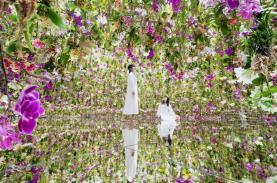 Mê mẩn với triển lãm hiệu ứng 3D từ 13.000 cây hoa lan ở Nhật Bản