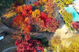 Lịch dự báo mùa lá đỏ, lá vàng rực rỡ nhất tại Hàn Quốc 2019