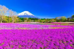 NHẬT BẢN: OSAKA - KOBE - KYOTO - HAKONE - YOKOHAMA - TOKYO (LỄ HỘI HOA CHI ANH . CÔNG VIÊN HOA TỬ ĐẰNG)